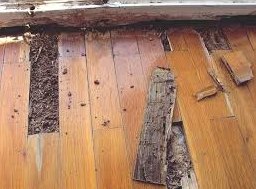 How to spot and prevent termite damage?